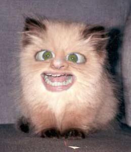 ugly_cat3.jpg